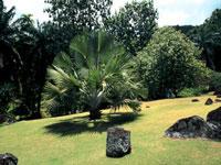 Mahe Botanical Gardens © Angelo Cavalli / STMA