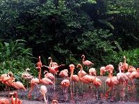 Jurong Birdpark