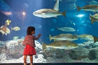 South Carolina Aquarium © Harry Alverson