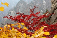 Autumn colours at Seoraksan National Park © JCT