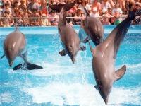 Dolphins at Marineland © david.nikonvscanon