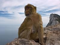 Gibraltar © Forster Foto