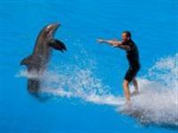Loro Parque dolphin show ©