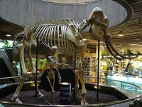 Natural History Museum © emagdi