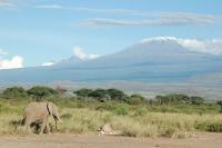 Mt Kilimanjaro National Park, Tanzania © Charles Asik