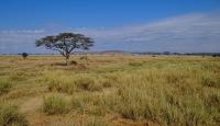 Serengeti National Park, Tanzania © Bjørn Christian Tørrissen