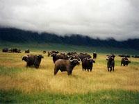 Ngorongoro Crater © Judith Duk