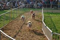 Pig Race © Lorax