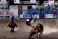 Rodeo shows © C. G. P. Grey