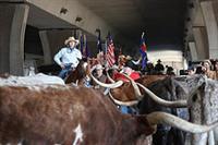 San Antonio Stockdrive and Rodeo ©