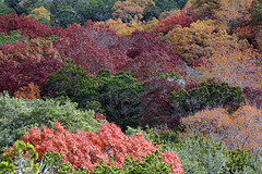 The many hues of Hill Country ©