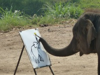 Elephant painting © Deror Avi
