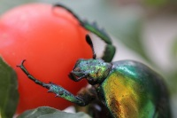 Coleoptera © Georgios Katsanevakis