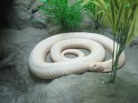 Snake © MattC.