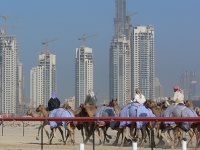 Camel racing in front of the Dubai towers © Larsz