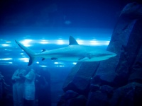 A shark at the Dubai Aquarium © Joi Ito