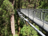 Tree Top Walk, Valley of the Giants © Amanda Slater