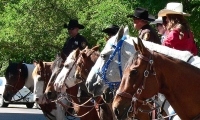 Riders with the Greeley Stampede