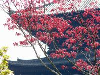 To-ji in spring