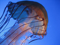 Jellyfish at New England Aquarium