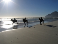 Enjoy horseriding on the beach in Vilanculos