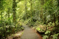 Gondwana Rainforest