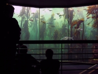 Two Oceans Aquarium, Cape Town