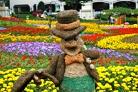 Beautiful flowers on display at Everland